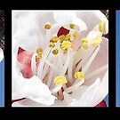 Apricot Blossom Triptych  by taiche