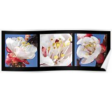 Apricot Blossom Triptych  Poster