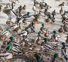 The meeting of the Clans by PhotosByHealy