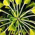 Euphorbia - fractal by Linda Lees