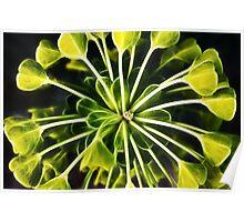 Euphorbia - fractal Poster