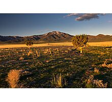 Trees in the desert of Utah Photographic Print