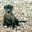 Baboon Baby by Jasmine Staff