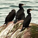 The Great Cormorants by Brian Carey