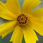 Unknown Flower by ivanwillsau
