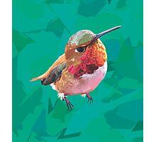 Hello, Hummingbird Photographic Print