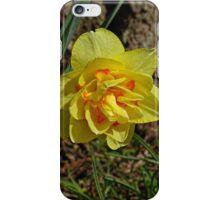 Double Daffodil iPhone Case/Skin