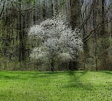 Star Magnolia Tree by Sandy Keeton