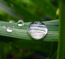 Drops of Jupiter  by Megan Martin