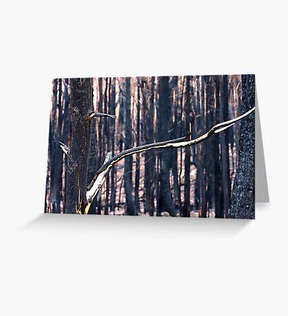 Forest Destruction. Greeting Card
