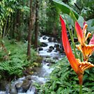 Rainforest by dwcdaid