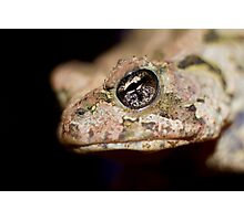 Toad or Prince? Photographic Print