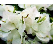 Whiter Shade Of Pale Photographic Print
