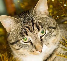 Tabby Cat and Yellow Tinsel by AnnArtshock