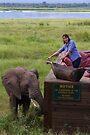 WOW! by Explorations Africa Dan MacKenzie