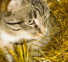Tabby Cat and Yellow Tinsel 2 by AnnArtshock
