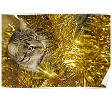Tabby Cat and Yellow Tinsel 3 Poster