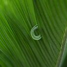 Cycad by Jo  Young