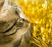 Tabby Cat and Yellow Tinsel 4 by AnnArtshock