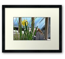 Where's the squirrel ? Framed Print