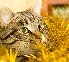 Tabby Cat and Yellow Tinsel 5 by AnnArtshock