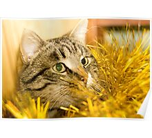 Tabby Cat and Yellow Tinsel 5 Poster