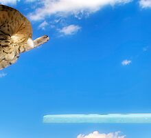 Feline Aquatics by Steven Buffington