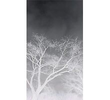 Negative  Photographic Print