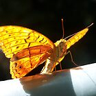 Butterfly by heyitsmefi