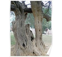 The twisted, gnarled stump and stem of a large tree inside the Qutub Minar Compound Poster