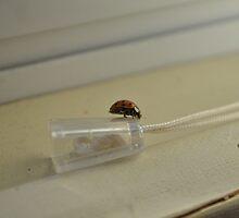 Ladybug explorer by TheKoopaBros