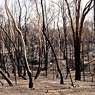 Burnt Trees by melbourne