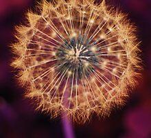 Sparkler by Josh Le Good
