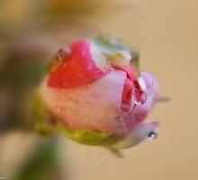 springtime by Andrea Rapisarda