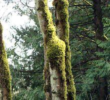 Mossy Tree by JeanMCarlos