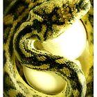 Snake Mother by Gozza