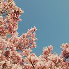 Pink Blossoms by Cassia