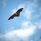 where's The Bat Mobile by mspfoto