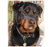 Troy: Father of Nine (Rottweiler) Poster