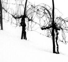 frozen vineyard on a frosty winter day Sticker