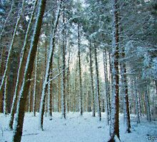 Bavarian Forest by dmark3