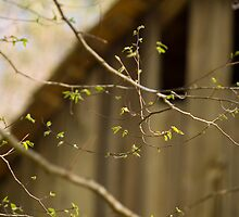 Spring in the Smokies by Susan Gottberg
