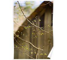 Spring in the Smokies Poster