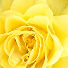 Icy Yellow Rose by Samuel Fletcher