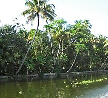 Coconut trees and other plants lined up next to a creek by ashishagarwal74