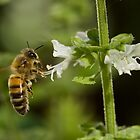 Bee by Cawi