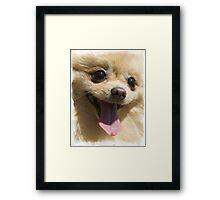 Chihuahua Dog Print / Tshirt - animal print Framed Print