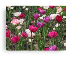Tulips! Canvas Print