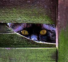 Peeping Tom by Sue Purveur