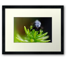 BeetleJuice Framed Print